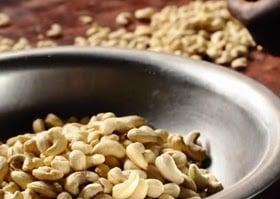 bisnis kacang mete
