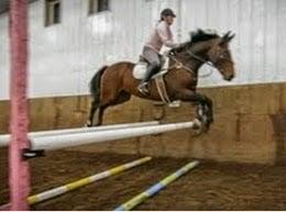 profesi joki kuda