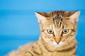 250 Nama Kucing Perempuan Paling Cantik Dan Artinya Kerja Usaha
