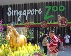 kebun binatang taman safari singapura