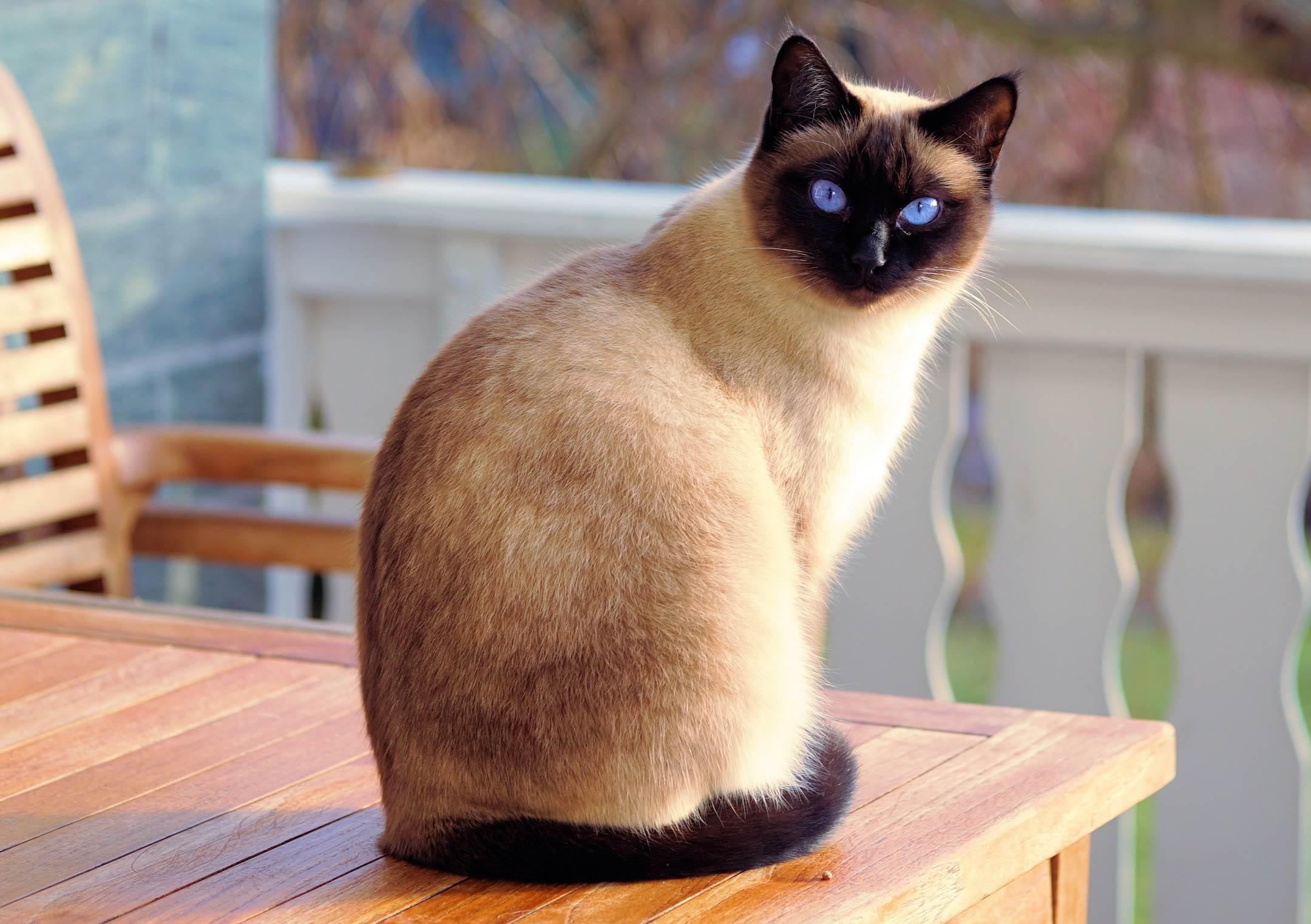 230 Nama Kucing Jantan Paling Bagus Lucu Dan Unik Kerja Usaha