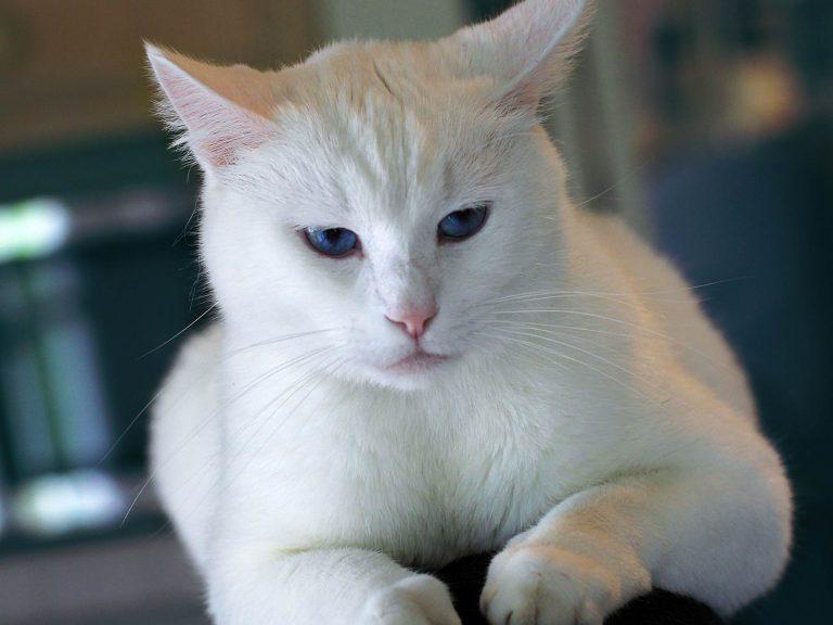 nama kucing betina