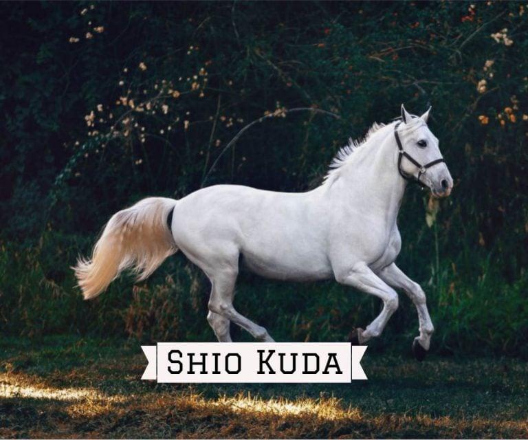 prediksi shio kuda