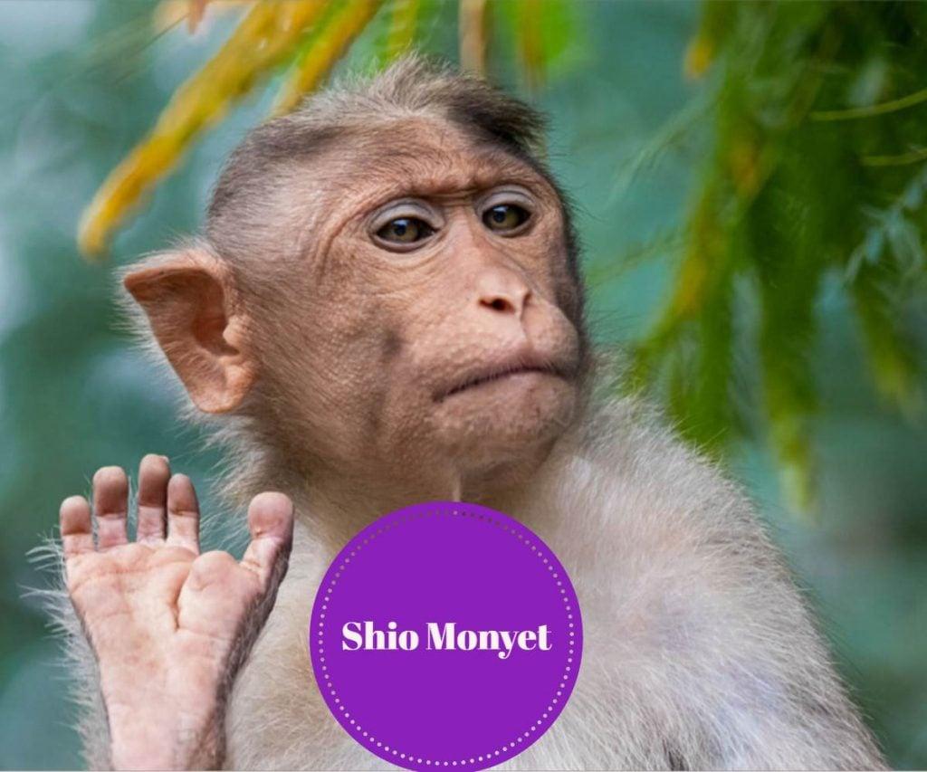 prediksi shio monyet